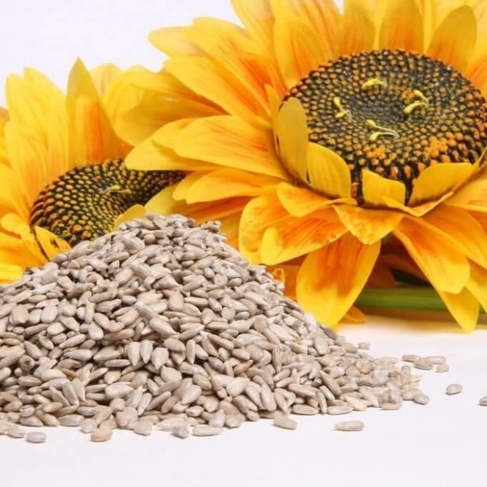 Лучше всего семена для похудения