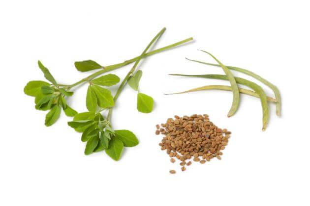 Травы, которые помогут набрать вес