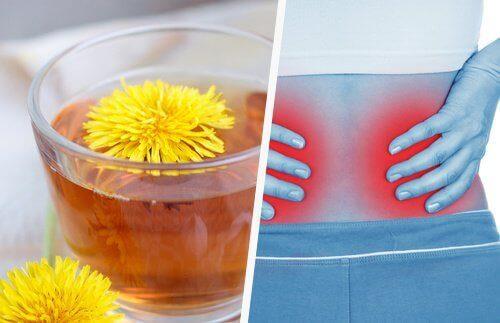 5 простых способов вывести токсины из почек