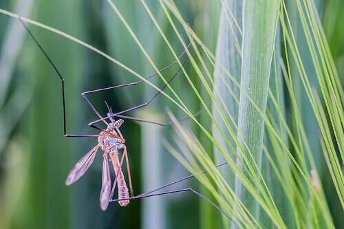 Лучшие средства от комаров домашнего приготовления