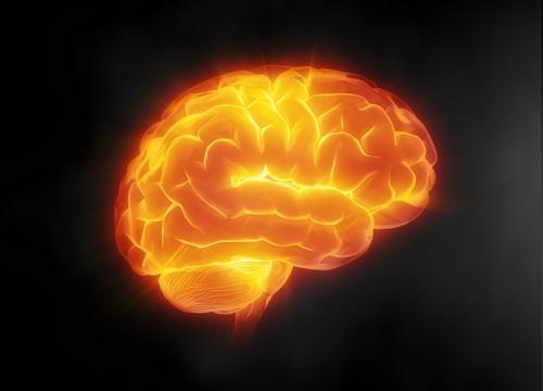 Резвератрол - крепкий щит для мозга