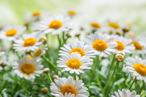 Лекарственные растения, которые можно вырастить дома