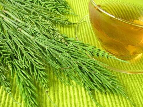 Хвощ - растение для похудения и минерализации